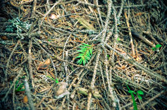 Bright green moss macro shot Royalty Free Stock Image