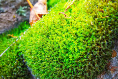Bright green moss on the old stone, nature background Royalty Free Stock Images