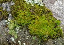 Bright Green Moss Patch on Large Boulder Surface. Royalty Free Stock Photos