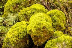 Bright Green Moss on stone Stock Images