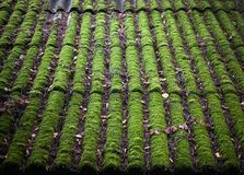 Bright green of mossy roof Stock Images