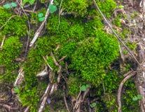 Autumn moss stock photo