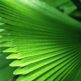 Bright green palm leaves Stock Image