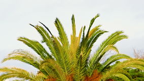 Bright green palm leaves are waving in the slight breeze on a sunny summer day. stock video