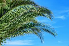 Bright green palm tree branches. On blue sky background Stock Image