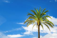 Bright green palmtree On a background of blue sky stock image