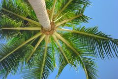 Free Bright Green Palmtree Leaves View Under Tree Royalty Free Stock Image - 123735386