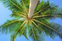 Bright green palmtree leaves view under tree stock images