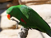 Bright green parrot with yellow and orange beak royalty free stock photography