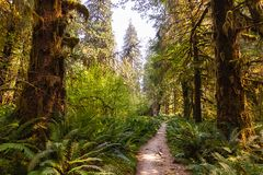 Bright green path leading deep into summer forest royalty free stock image