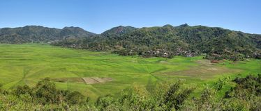 Bright green rice spider web fields Stock Photo
