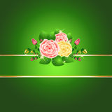 Bright green roses card Stock Images
