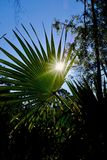Bright Green Scrub Palm and Shadow Stock Photography