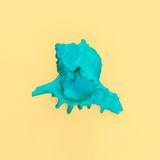 Bright green shell on a yellow background Royalty Free Stock Photo