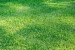 Bright green short grass with shadow spots Royalty Free Stock Image