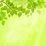 Bright green summer background Royalty Free Stock Photos