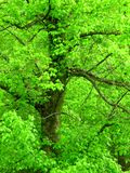 Bright green tree. Bright green landscape and tree Royalty Free Stock Photography