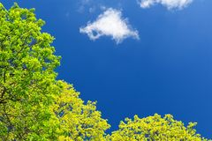 Bright green tree leaves in blue sky with cloud copyspace Stock Images