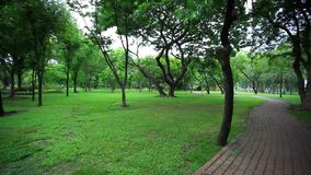 Bright green trees in the park. HD. 1920x1080. Bright green trees in the park on a sunny day. HD. 1920x1080 stock footage