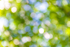 Bright green and white blur bokeh abstract light spring forest b Stock Photos