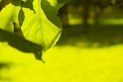 Leaf on blurred background royalty free stock photography