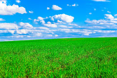 Bright green young grass of the field against the blue sky with clouds. Stock Images