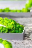 Bright greenery Stock Image