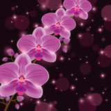 Bright greeting or invitation card with orchid Stock Photo