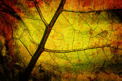 Bright grunge leaf royalty free stock photography