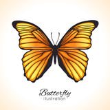 Bright hand drawn butterfly Royalty Free Stock Photography