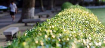 Bright Hedge  Stock Image