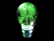 Bright idea. Bulb with tree inside, isolaten on a black background. Many metaphorical uses Stock Photo