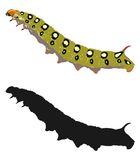 Bright image of the caterpillar and its silhouette. Vector illustration. stock illustration