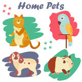 Bright images of domestic animals cat, parrot, dog and guinea. Can be used for pet shops, clinics, pet food advertising. Stock Photos