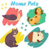 Bright images of domestic animals cat, snail dog and guinea. Can be used for pet shops, clinics, pet food advertising. Stock Photos