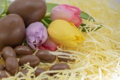 Colorful tulips, chocolate eggs in straw for nature and countryside Easter stock image