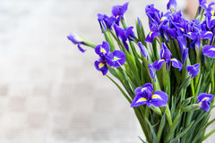 Bright irises Background Stock Photos