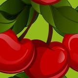 Bright jucy fresh cherry fruit vector. Cherries Royalty Free Stock Photo