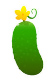 Bright juicy cucumber cartoon over white background Royalty Free Stock Image