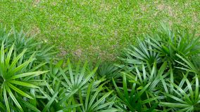 Bright juicy exotic tropical greens in the jungle forest equatorial climate. Background with unusual plant foliage swaying. Natural texture with juicy leaves stock video