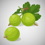 Bright juicy gooseberry on grey background. Sweet delicious for your design in cartoon style. Vector illustration. Bright juicy gooseberry on grey background Stock Photo