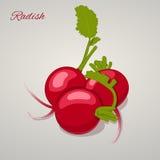 Bright juicy radish simple cartoon style. Vector Illustration. Stock Photography