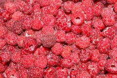 Bright. Juicy. Raspberries. Wild. Forest. stock photos