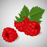 Bright juicy raspberry on grey background. Sweet delicious for your design in simple cartoon style. Vector illustration. Berries Collection Royalty Free Stock Photos