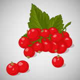 Bright juicy red currant on grey background. Sweet delicious for your design in cartoon style. Vector illustration. Berries Collec Royalty Free Stock Photos