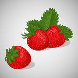 Bright juicy strawberry on grey background. Sweet delicious for your design in cartoon style. Vector illustration Royalty Free Stock Images