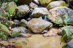 Bright jungle with river. Natural landscape Royalty Free Stock Photos
