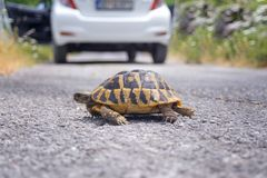 Land tortoise on the road Stock Image
