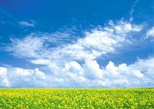 Bright landscape Stock Images