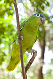 Bright large tropical parrot Royalty Free Stock Image